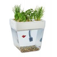 Набор для выращивания растений и ухода за рыбкой «Акваферма»